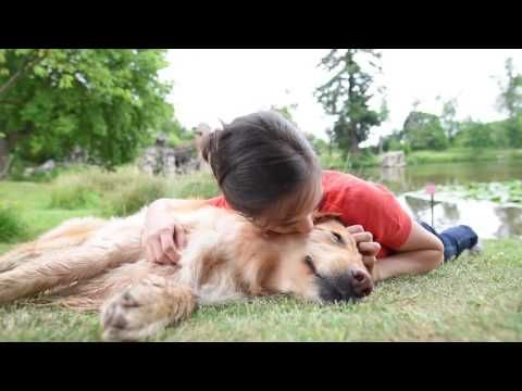 Tips For Dogs Who Won T Come Inside When Called Dog Training