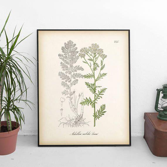 Yarrow print Botanical print Medicinal herbs Vintage