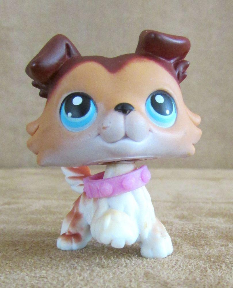 58 Sage Collie Littlest Pet Shop Hasbro Brown Blue Eyes Border