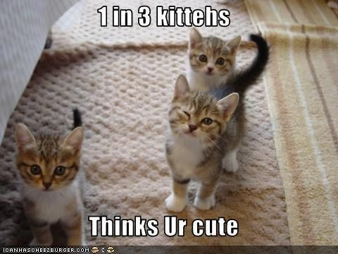 Cute Cats with Funny Captions | Cute Funny Kittens | CRAZY ...