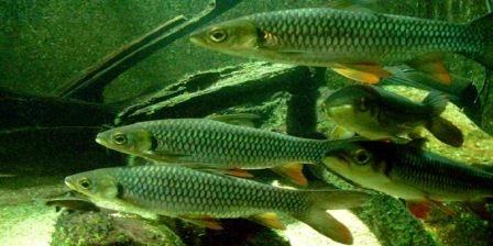 Cara Merawat Ikan Di Kolam Dengan Baik - Carles Pen