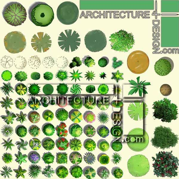 200 Trees Plan For Architectural Photoshop Rendering Psd Format Architecture For Design Photoshop Rendering Tree Plan Landscape Plans