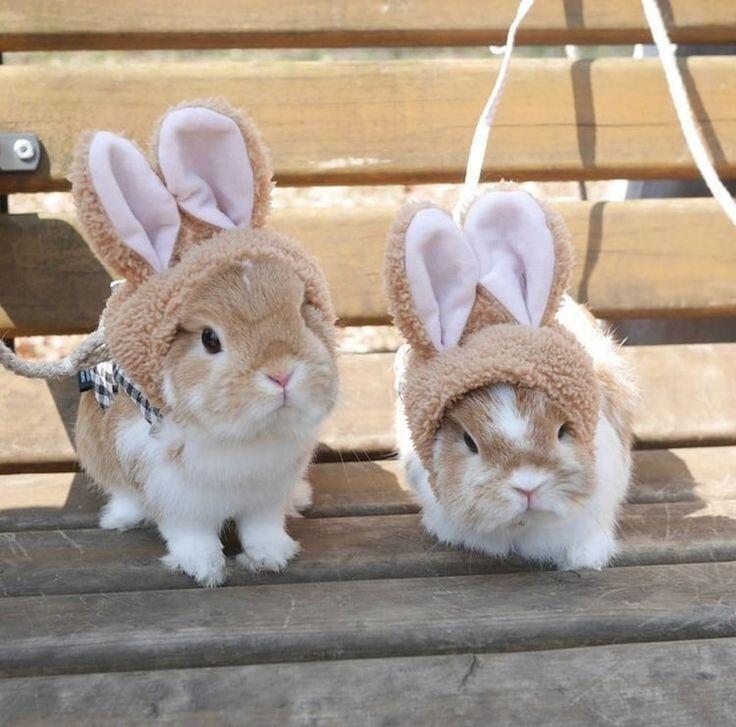 однажды самые милые кролики картинки много объём памяти позволяет