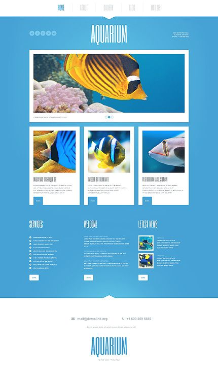 Website Template Fish Responsive Website Template  Template Website And Web