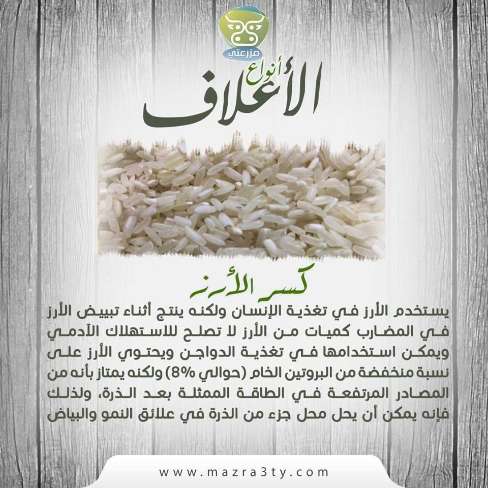 يستخدم الأرز في تغذية الإنسان ولكنه ينتج أثناء تبييض الأرز في المضارب كميات من الأرز لا تصلح للاستهلاك الآدمي ويمكن استخ Zucchini Lasagna Keto Recipes Zucchini