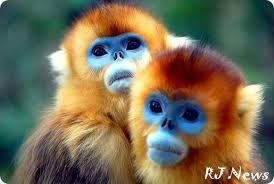 Картинки по запросу обезьяны фото