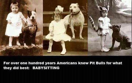 Pitbull Sayings Pitbulls Sayings Quotes Nanny Dog