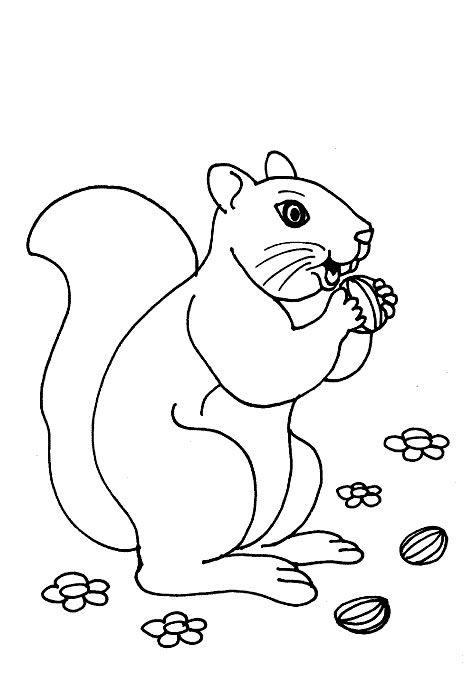 Coloriage Gratuit Foret.Coloriage Dans La Foret Foret Squirrel Coloring Page