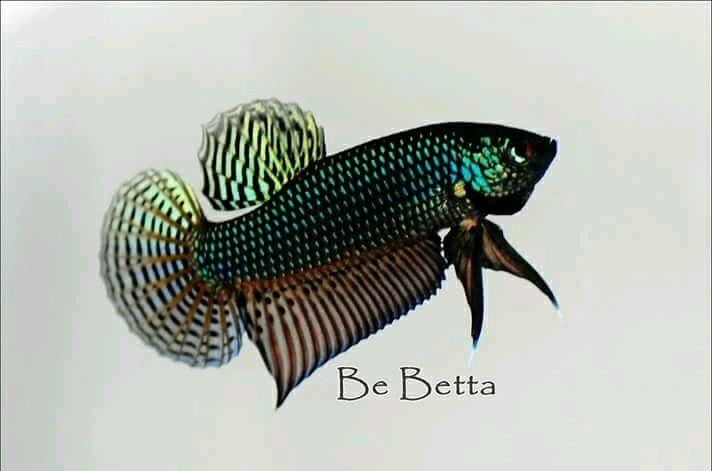 Smaragdina  #by_bebetta