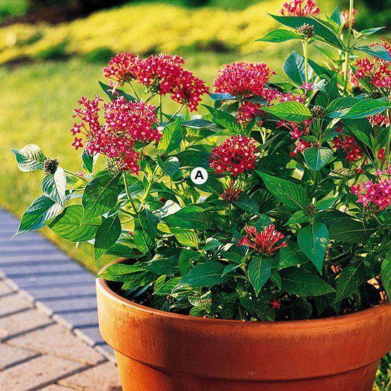 Top Butterfly Container Garden Ideas #balkonblumen
