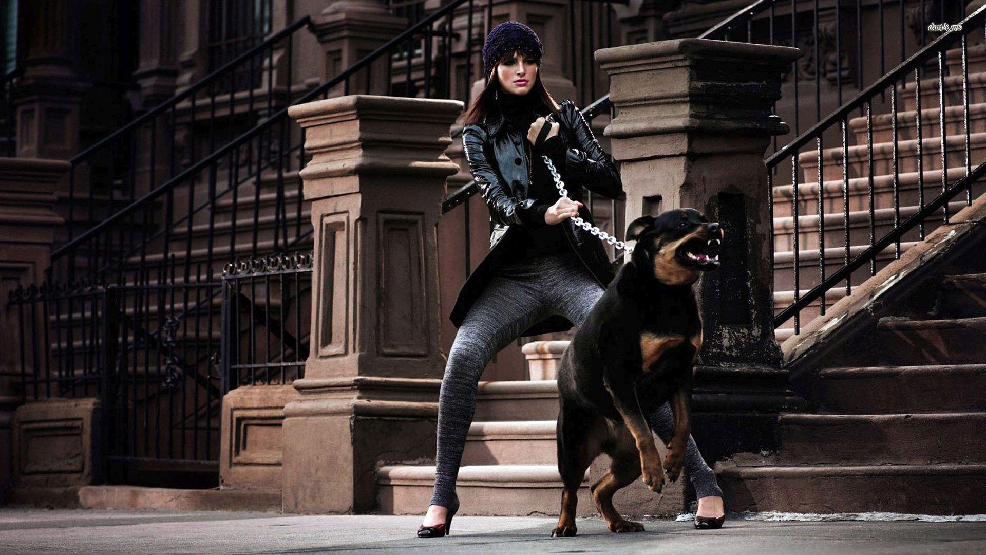 Rottweilers Rottweiler Dog Photography Dog Wallpaper