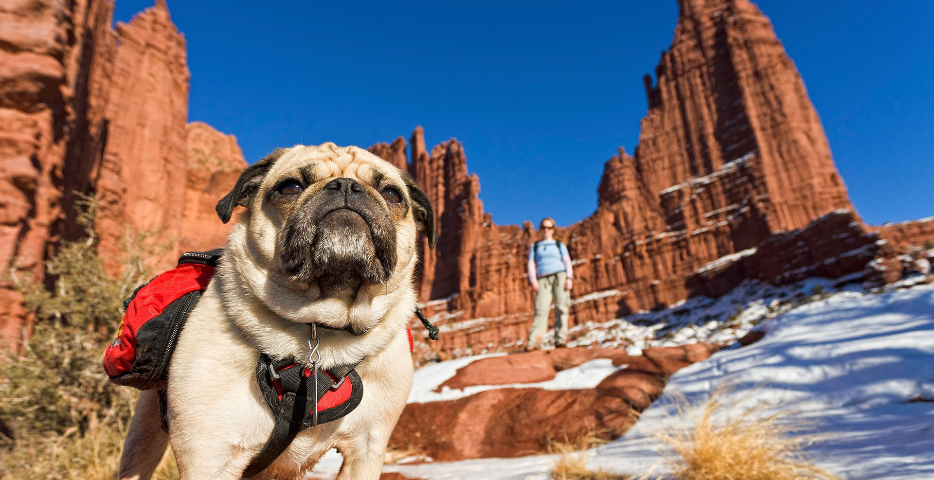 There are many petfriendly trails and to