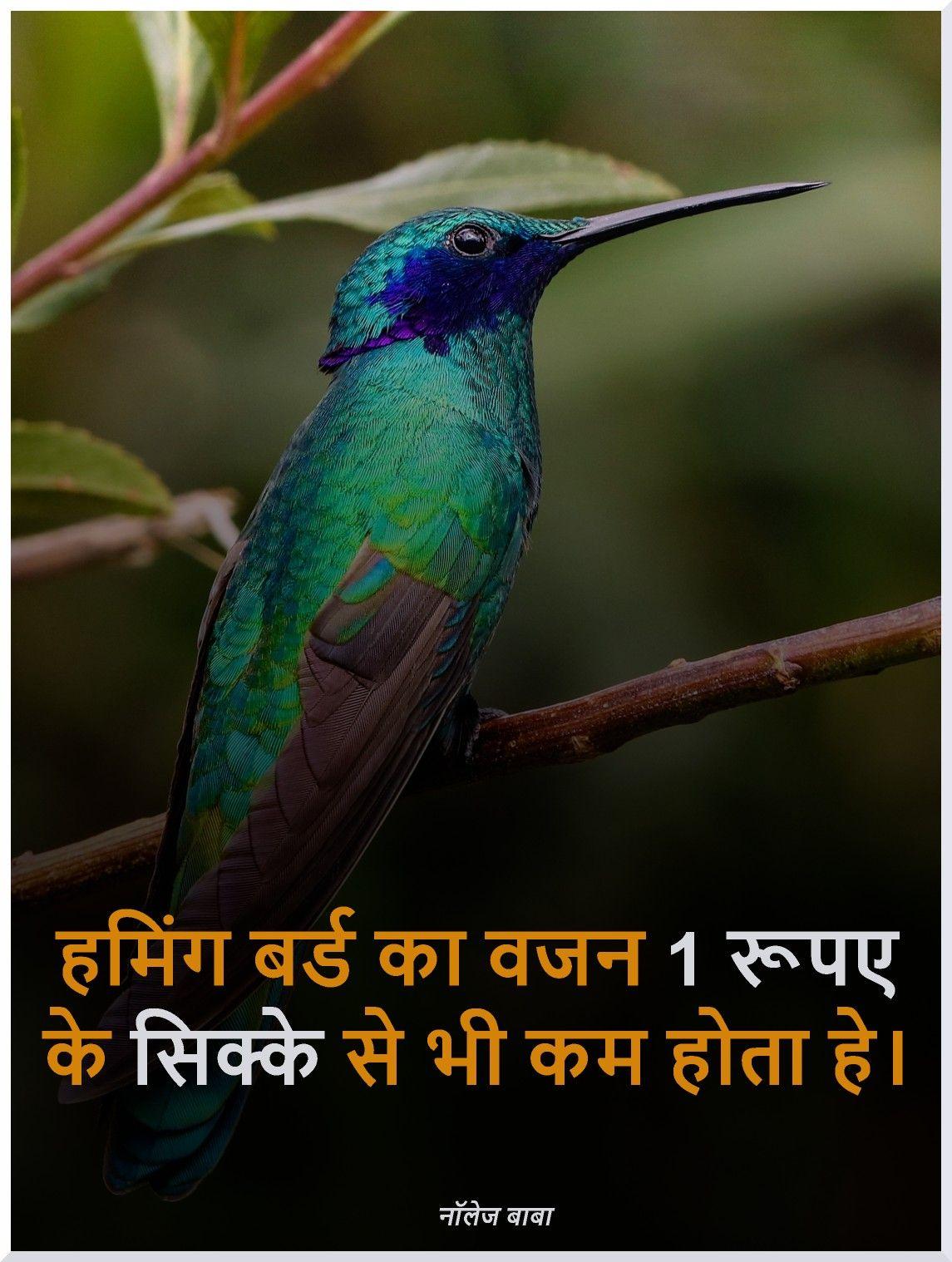 Interesting fact in Hindi | Knowledge | Gernal knowledge, General