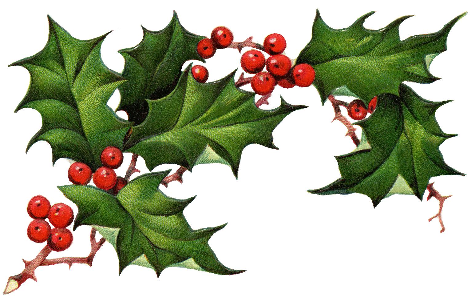 sprig of holly and berries google zoeken weihnachtliche motive pinterest weihnachtlich. Black Bedroom Furniture Sets. Home Design Ideas