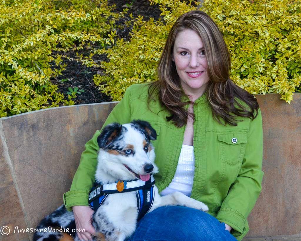 Jennifer Raises Her Toy Aussiedoodle Puppies In Atlanta Ga Jennifer Is Very Active On The Awesomedoodle Crew Not Onl In 2020 Aussiedoodle Puppies Breeders
