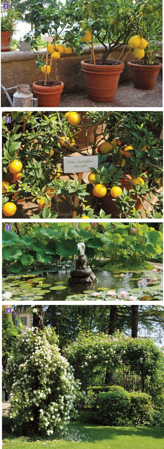 giardino a terrazze, giardino terrazzato, giardino pensile ...
