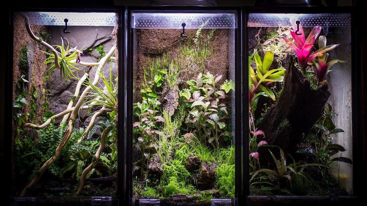 Aquarium to gallon vertical vivarium natureterrarium