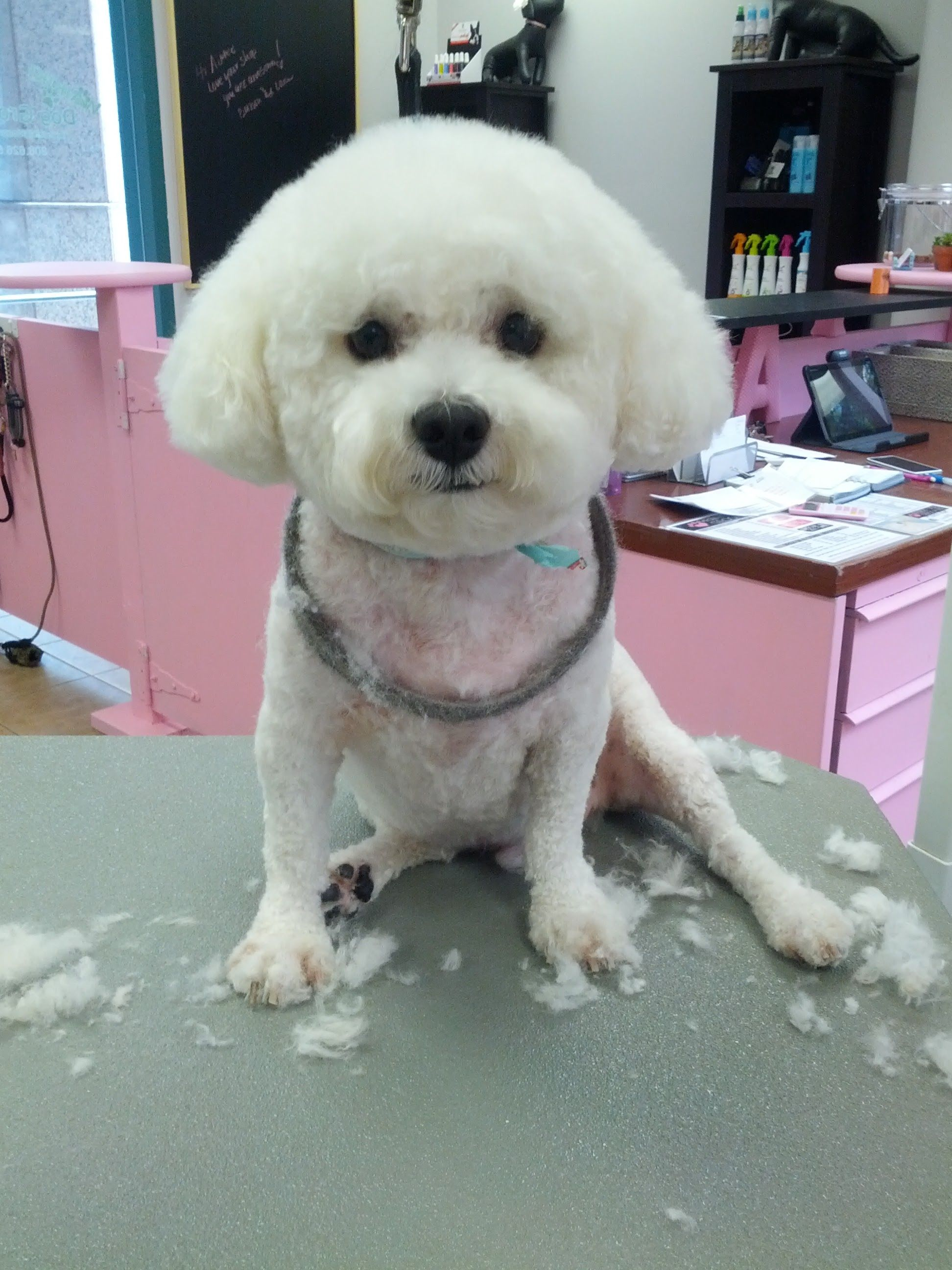 Pin by Honolulu Dog Spa on Dog Grooming Dogs, Dog
