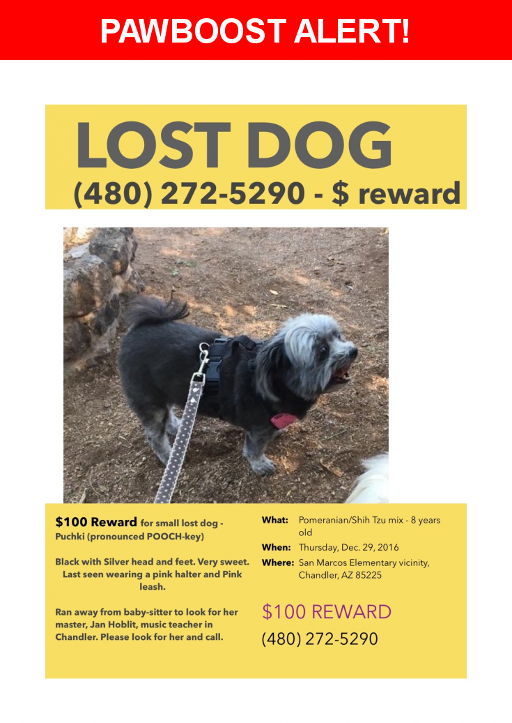 Please spread the word! Puchki was last seen in Chandler, AZ 85225.  Description: Puchki (Pooch-key) is 9 years old, Shih-Tzu and Pomeranian. She is very small and has a silver face, head and feet. The rest is black. She has a bad left knee and a collapsible windpipe. She was wearing a pink harness and leash.  Nearest Address: Near W Fairview St & S Nebraska St