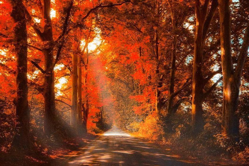 «Niente mi rende così felice come osservare la natura e dipingere quello che vedo» (Henri Rousseau)  Buon weekend! ☺  www.ecomarket.eu