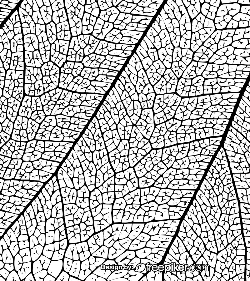 Leaf Texture Black White Background Leaf Texture White