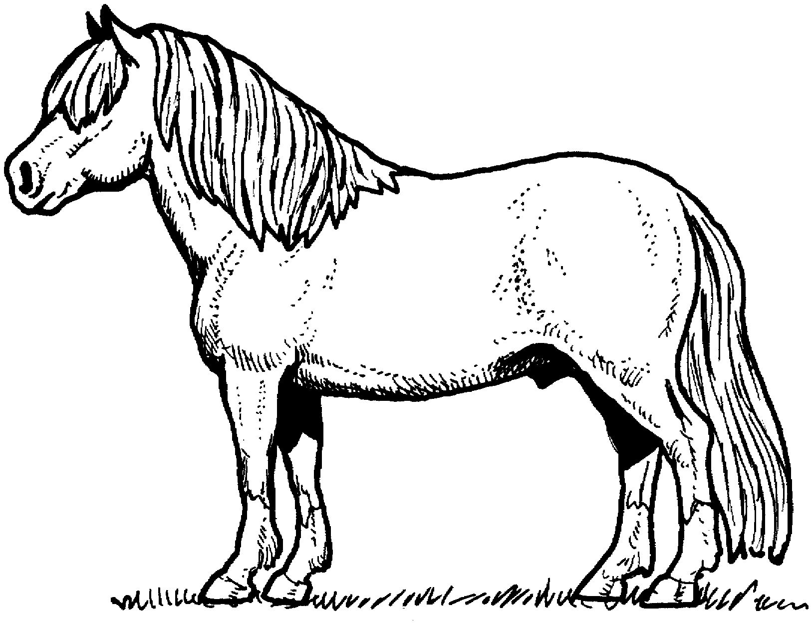 Ausmalbilder Pferd Pony : Horse And Pony Coloring Sheets Coloring Pages Pinterest