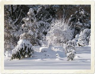 A GUIDE TO NORTHEASTERN GARDENING: Designing The Winter Garden – Creating All Year Interest in the Landscape