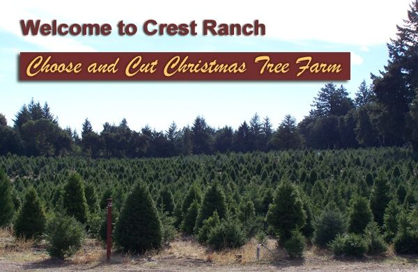 crest ranch christmas tree farm santa cruz california bay area christmas trees chrissymas pinterest christmas tree farm santa cruz california