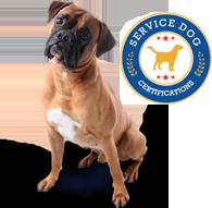 Service Dog Certification Service Dogs Dogs Service Animal