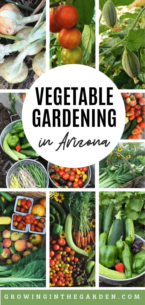 Vegetable Gardening in Arizona is part of Starting a vegetable garden, Vegetable garden, Arizona gardening, Organic gardening, Backyard vegetable gardens, Vegetable garden tips - Growing a successful vegetable garden in Arizona is possible when you understand these 7 principles for vegetable gardening in Arizona