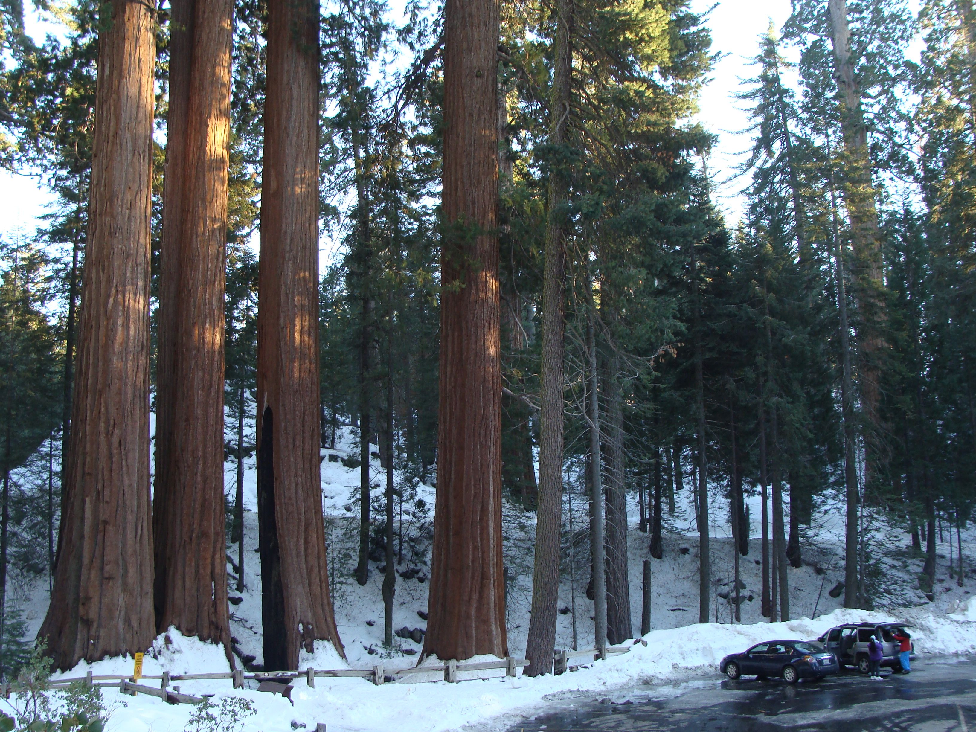 bear national pin sequoia pinterest cub forest in cabins