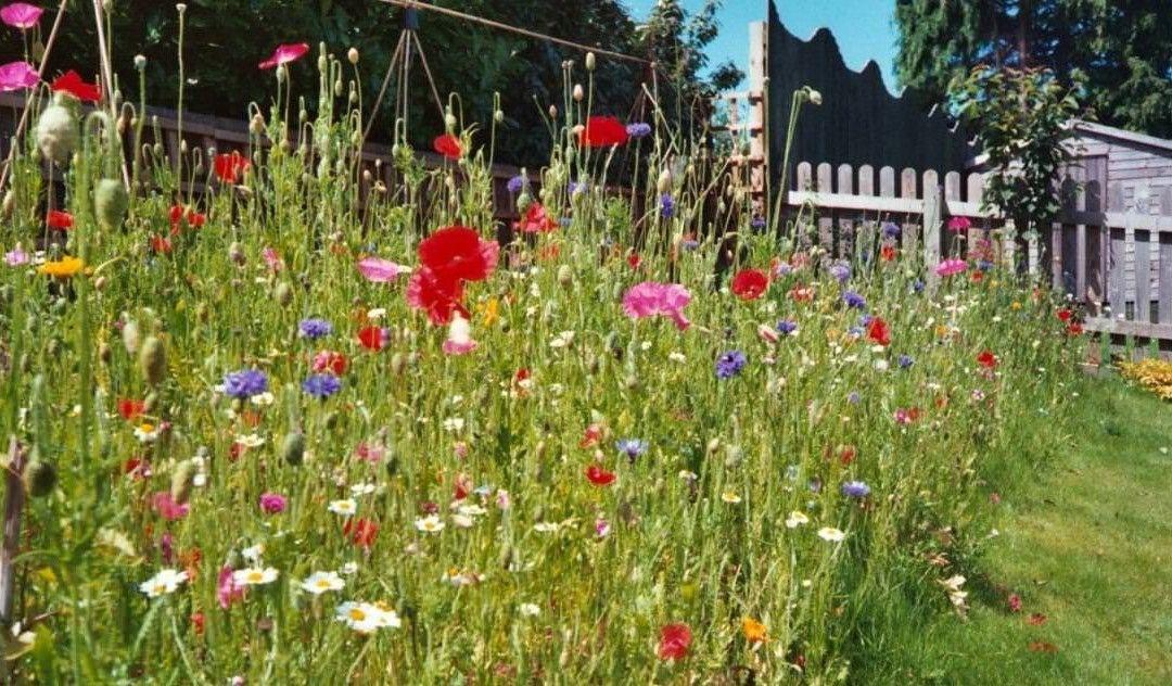 Wildflower turf – How to create a wildflower area ...