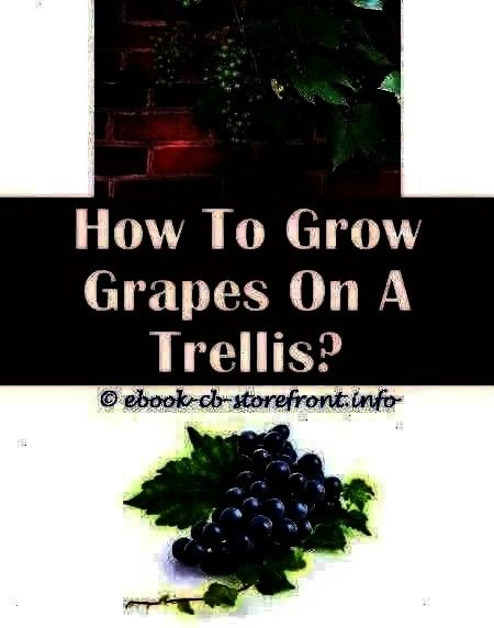 Locations 3 Enthusiastic Cool Tri How Many Grape Vines To Plant  Grape Growing Locations 3 Enthusiastic Cool Tricks How To Grow How Many Grape Vines To Plant  Grape Growi...
