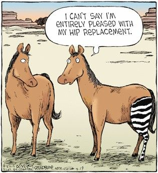 HIP REPLACEMENT. MSNBC just showed that a hip replacement ...