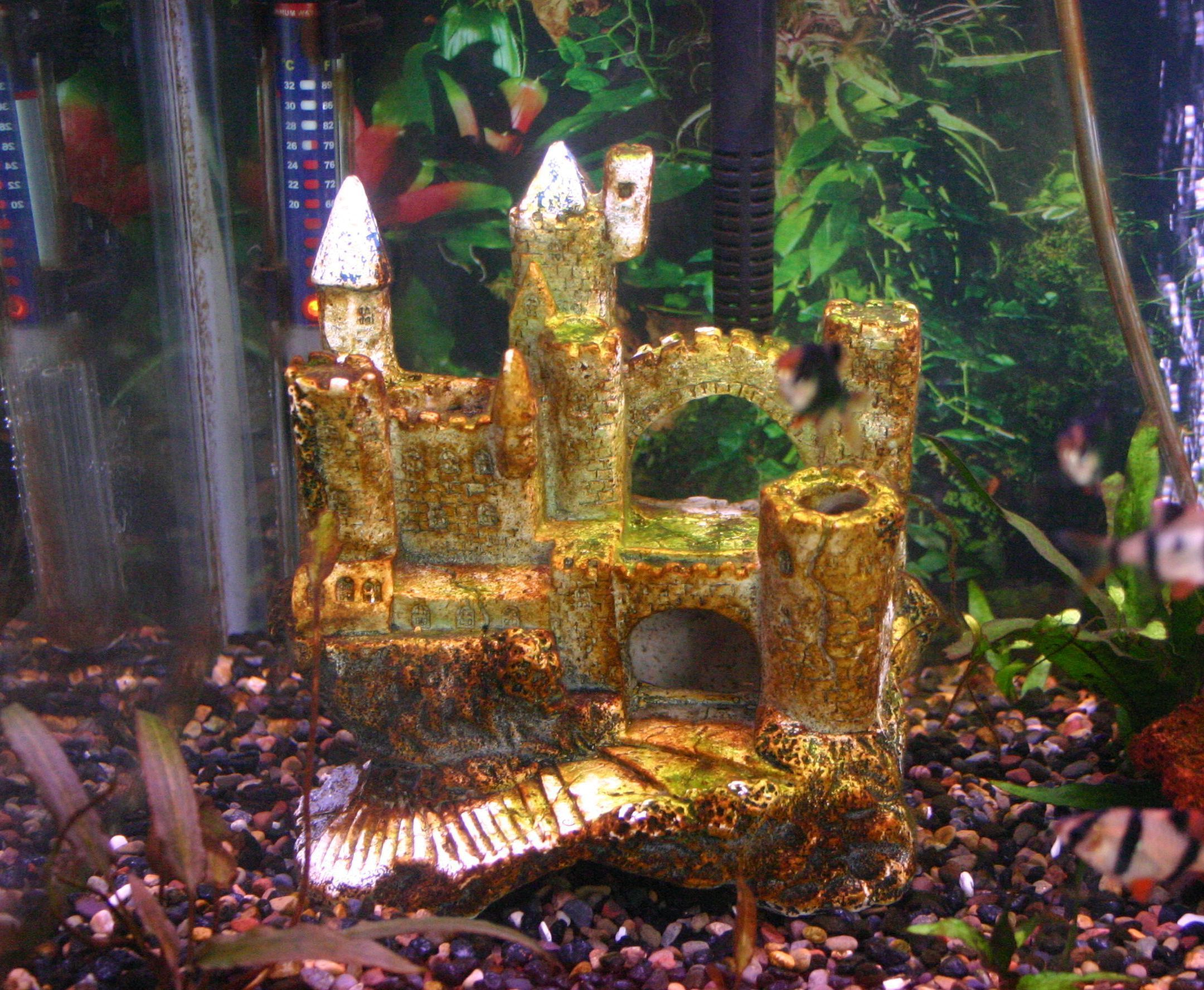 What causes brown algae in your fish tank aquariums and fish tanks