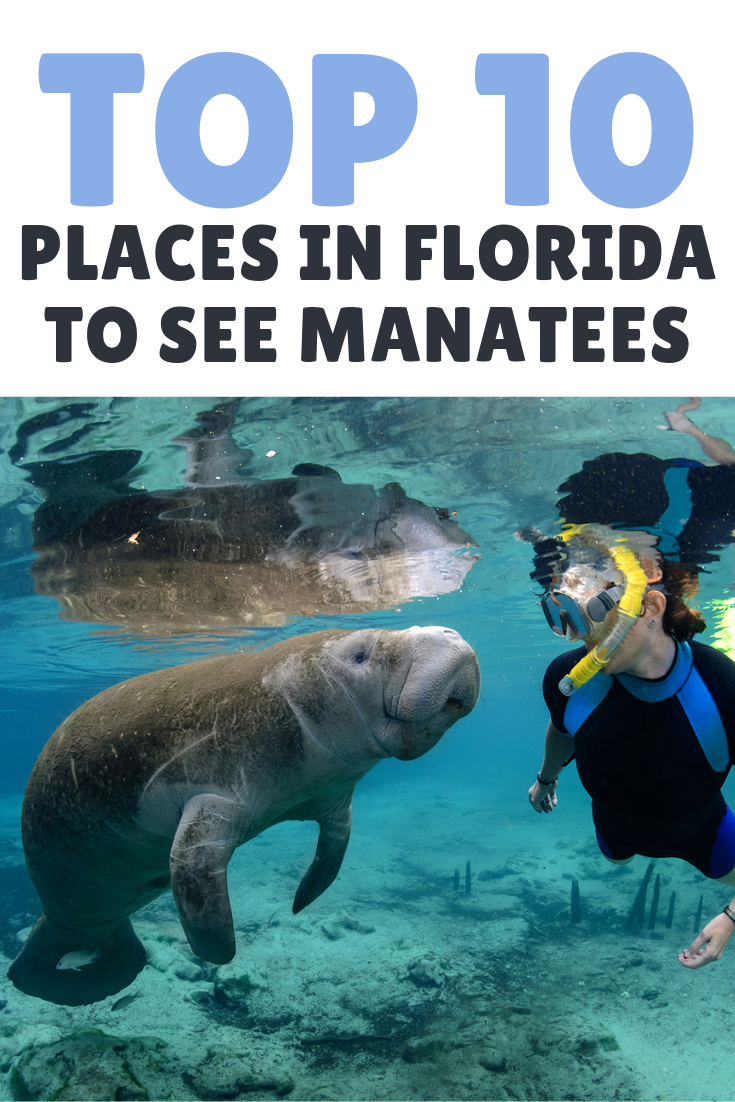 Top Ten Places In Florida To See Manatees Places In Florida Best Places In Florida Manatee