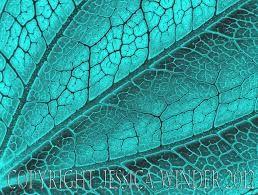 Resultado de imagem para nature pattern