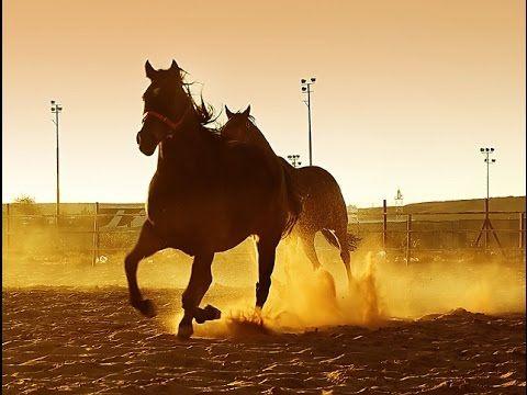 شيلة العضيان من عتيبه الشاعر سلطان البقمي اداء منير البقمي Places To Visit Places Horses