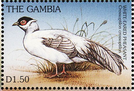 White Eared Pheasant stamps - mainly images - gallery format