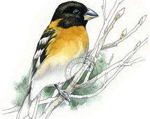 Black Headed Grosbeak watercolour - bird art, wildlife art - nature print of original artwork