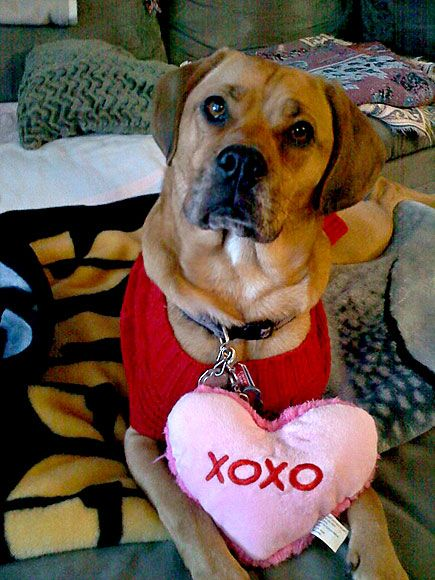 14 Photos Dogs And Cats On Valentine S Day Dog Photos Cute Animals