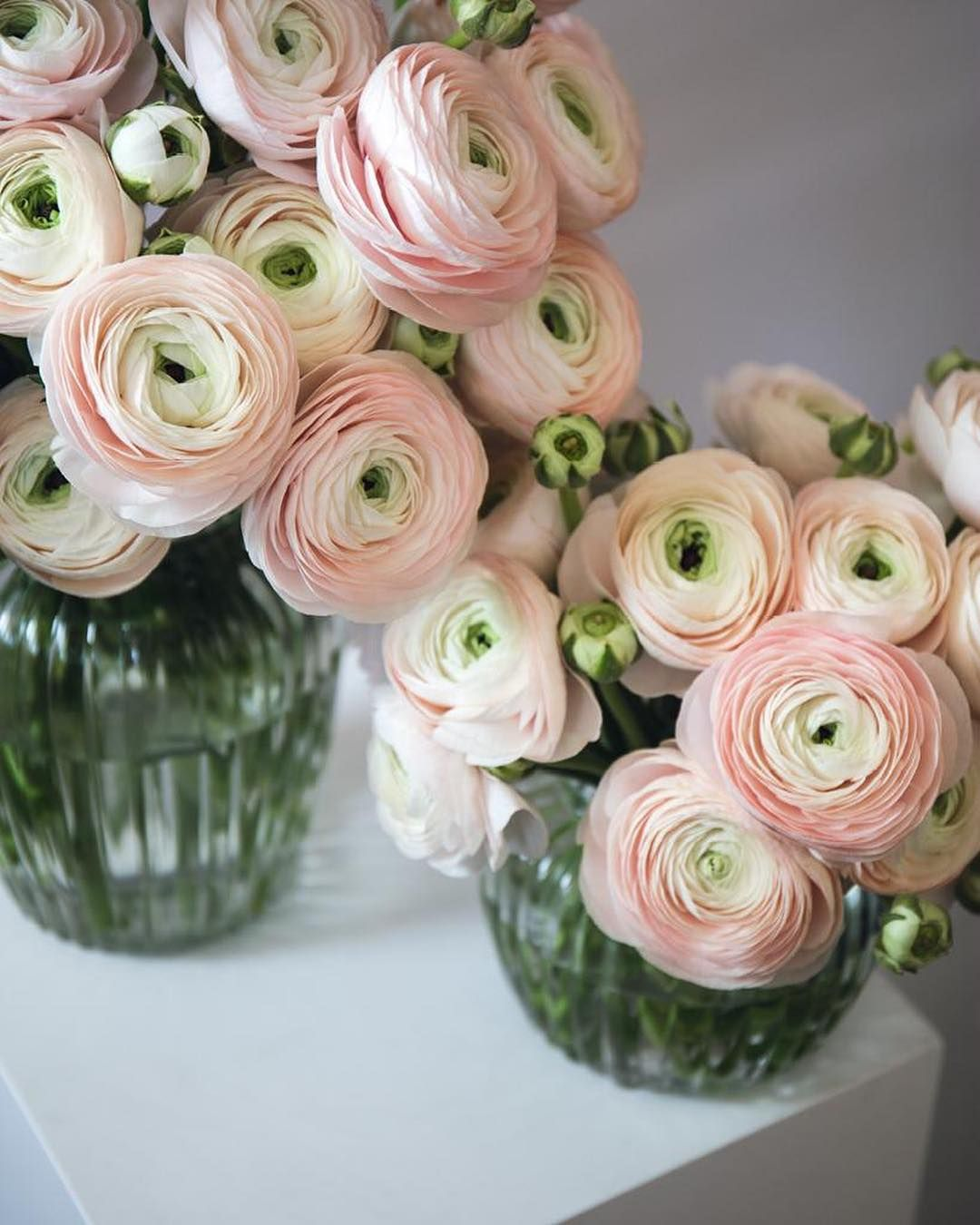 Ballet Slippers Ranunculus Serving This Week S Sundaysimplicity Arranged Loosely In The Elegant Medium Windsor Vase Tap The Image To Shop T Decoration Fleurs