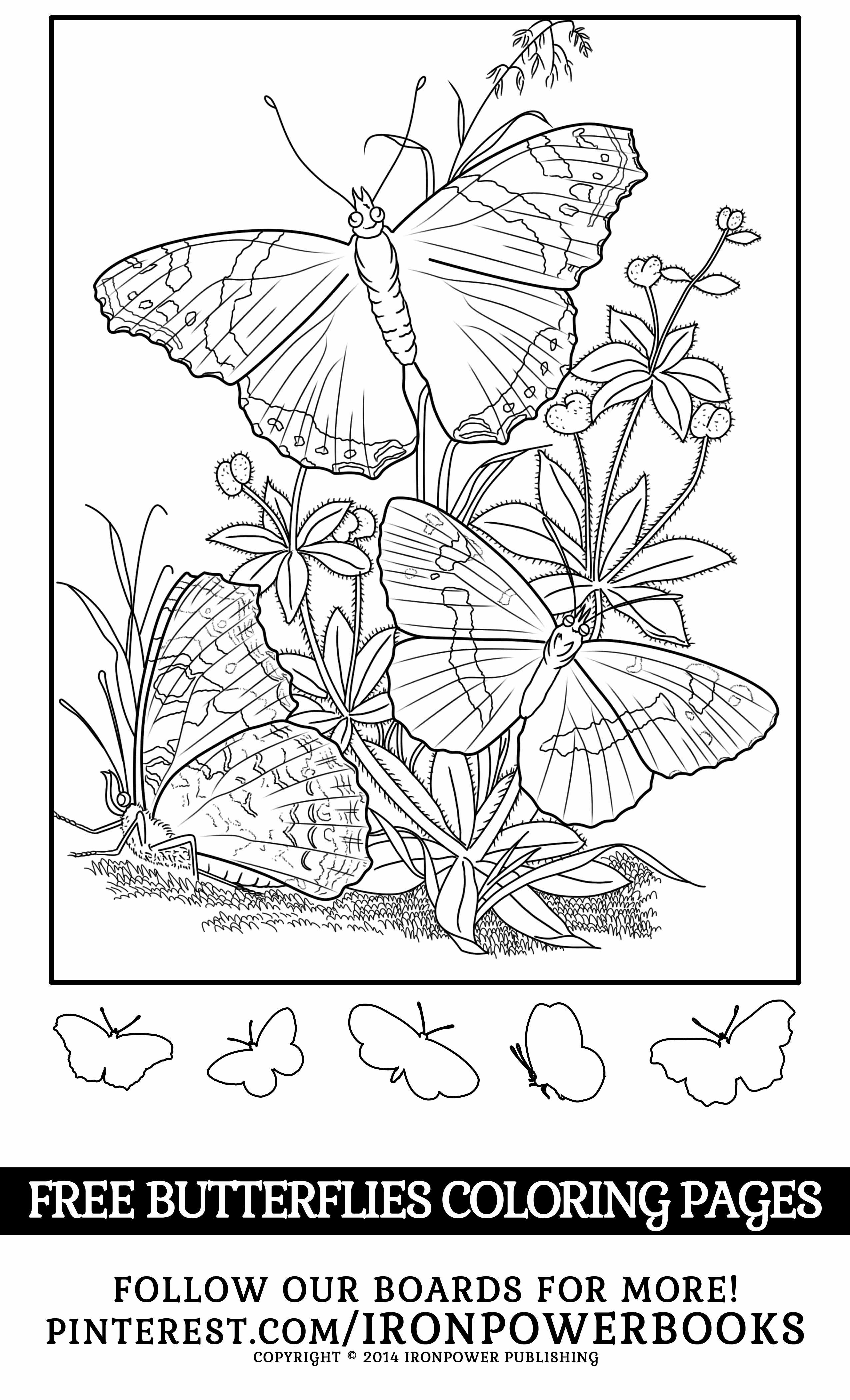 Free Butterflies Coloring Page From Ironpowerbooks Please Use Freely For Personal Non Commerc Butterfly Coloring Page Coloring Pages Blank Coloring Pages [ 4200 x 2550 Pixel ]