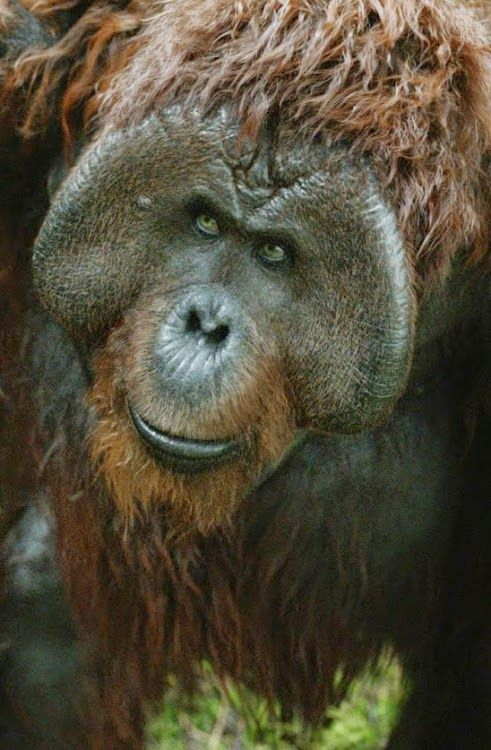 Dawn Of The Planet Of The Apes 2014 Part Twenty Dawn Of The Planet Planet Of The Apes Apes