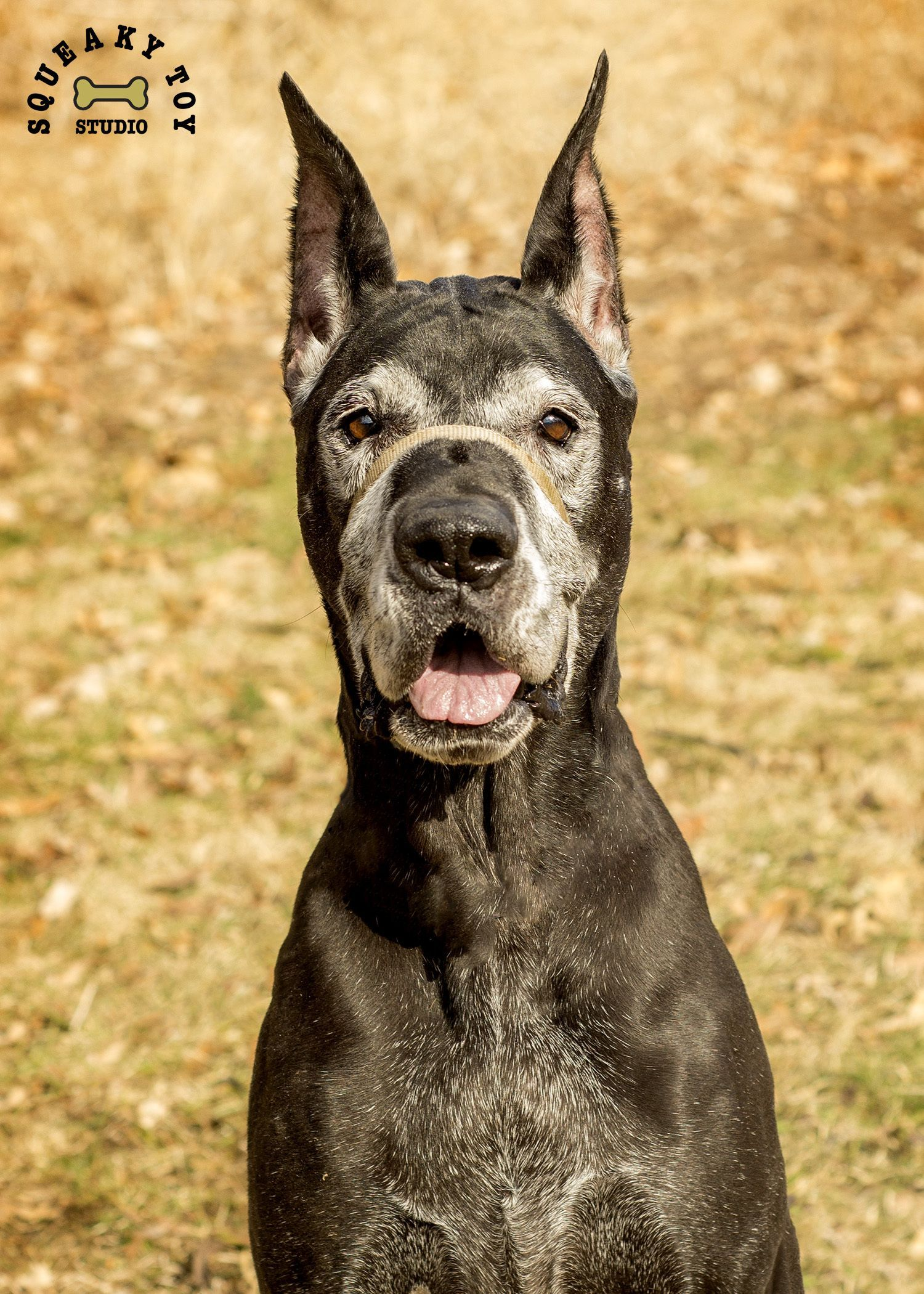 Adopt Danika On Country Hiking Great Dane Puppy Great Dane