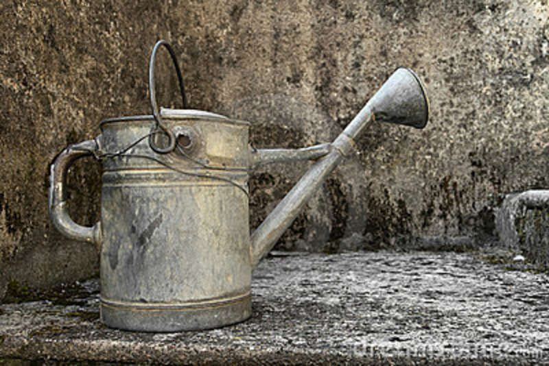 Antique Steel Watering Can Watering Can Canning Antiqued Steel