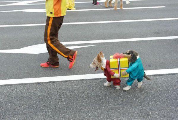 Hundekostüm - WinFail Bild | Webfail - Fail Bilder und Fail Videos