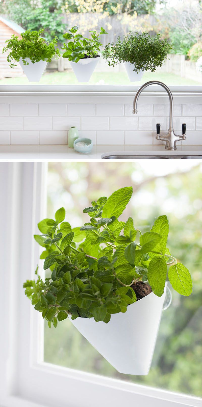 Beautiful Hanging Plants In Kitchen