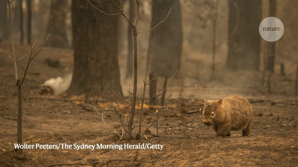 How Many Animals Died In Australia Fires
