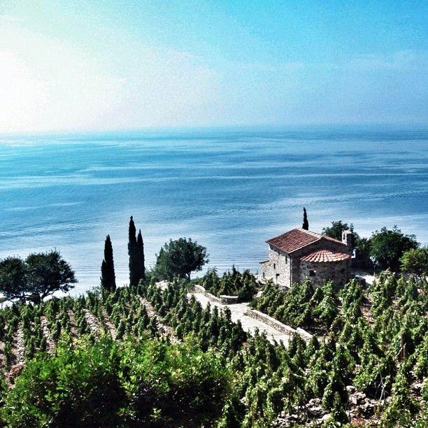 Vigne e cipressi sul mare, Isola d'Elba, Toscana